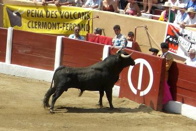 Novillo de Zaballos en Céret '2007