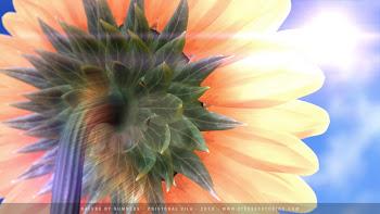 """...en transformación... """"girando a lo largo del día mirando hacia el sol"""""""