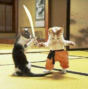 catfight2.jpg