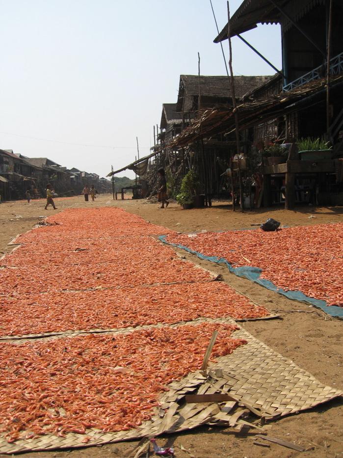 [KP+Shrimps.jpg]