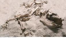 Fósil Dinosaurio Argentina