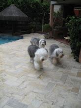 Eu Amo Meus Cachorros!