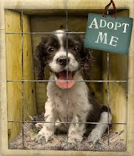 me adoptas?