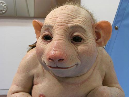 [swine]