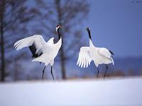 pássaros fotos
