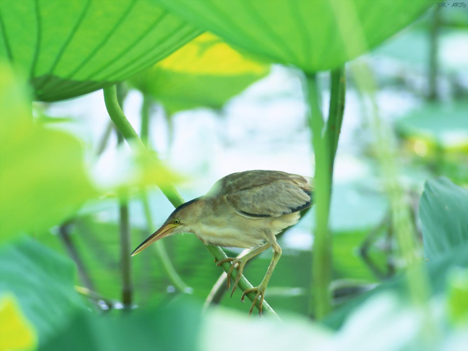 [bird+in+green.jpg]