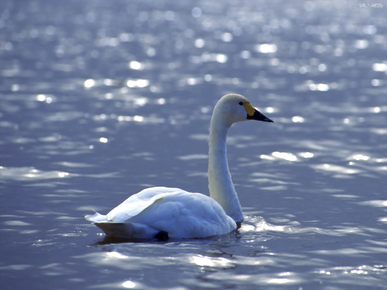 [lake+bird.jpg]