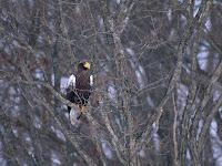 zdjęcia ptaków