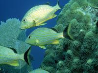 Peixes ornanentais