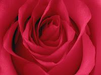 Figuras de rosas
