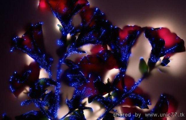 http://4.bp.blogspot.com/_-x7gqq9QJuA/TH3nE6QRSTI/AAAAAAAAQ2o/lkk7fNdDrR8/s1600/robert_buelteman_08.jpg