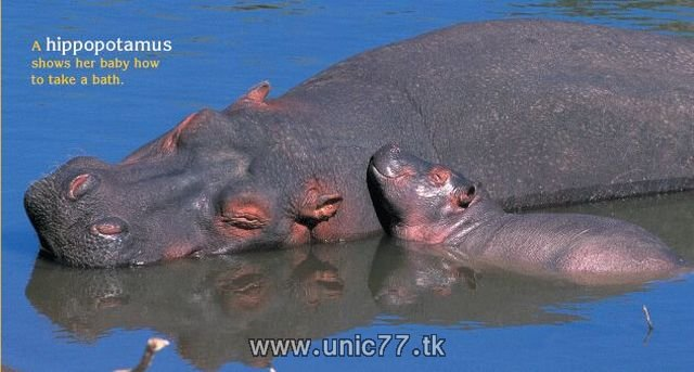 http://4.bp.blogspot.com/_-x7gqq9QJuA/TH4A6rHZUUI/AAAAAAAAQ6A/EAkKbCtUSgY/s1600/animals_vs_humans_11.jpg