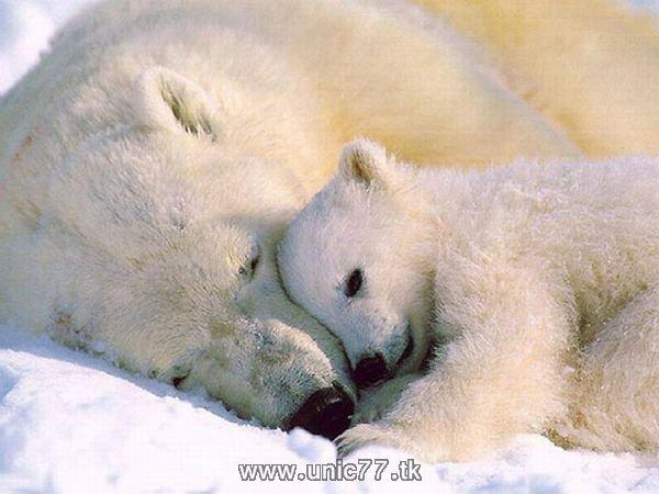 http://4.bp.blogspot.com/_-x7gqq9QJuA/TH4A8SSe-oI/AAAAAAAAQ6g/zrJHU8ZZ_ZY/s1600/animals_vs_humans_15.jpg