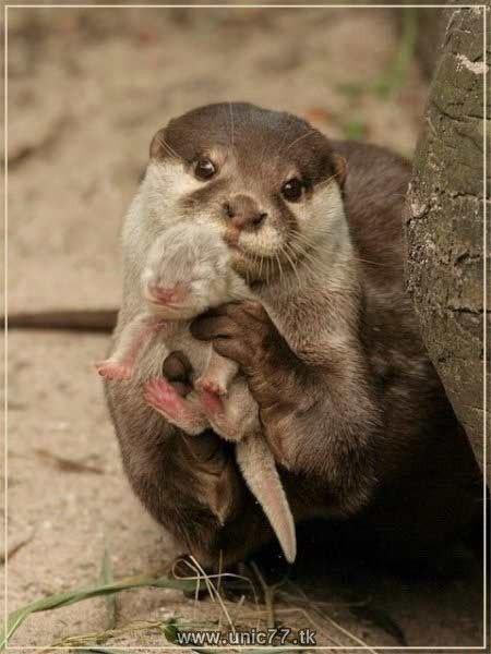 http://4.bp.blogspot.com/_-x7gqq9QJuA/TH4AVLJTUbI/AAAAAAAAQ4w/Uu8BIU3EwD8/s1600/animals_vs_humans_01.jpg