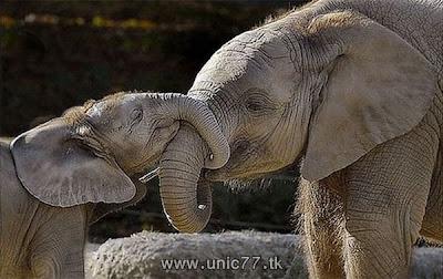 http://4.bp.blogspot.com/_-x7gqq9QJuA/TH4ApdyWN6I/AAAAAAAAQ5Y/FlW6jIgOMx4/s1600/animals_vs_humans_06.jpg