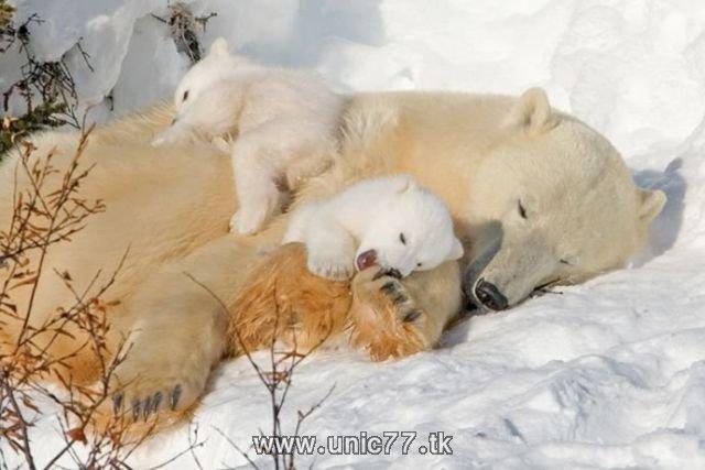 http://4.bp.blogspot.com/_-x7gqq9QJuA/TH4Aqf0Gm8I/AAAAAAAAQ5w/ERM2zcogPWk/s1600/animals_vs_humans_09.jpg