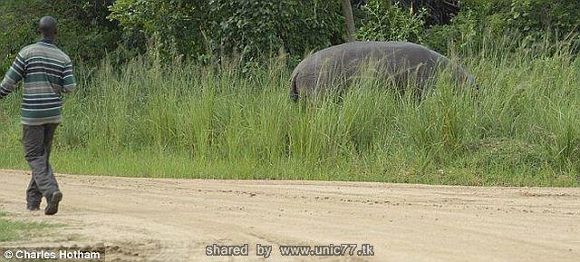 http://4.bp.blogspot.com/_-x7gqq9QJuA/TICBJH3xWdI/AAAAAAAAR1w/G9779j8XDV8/s1600/angry_hippo_01.jpg
