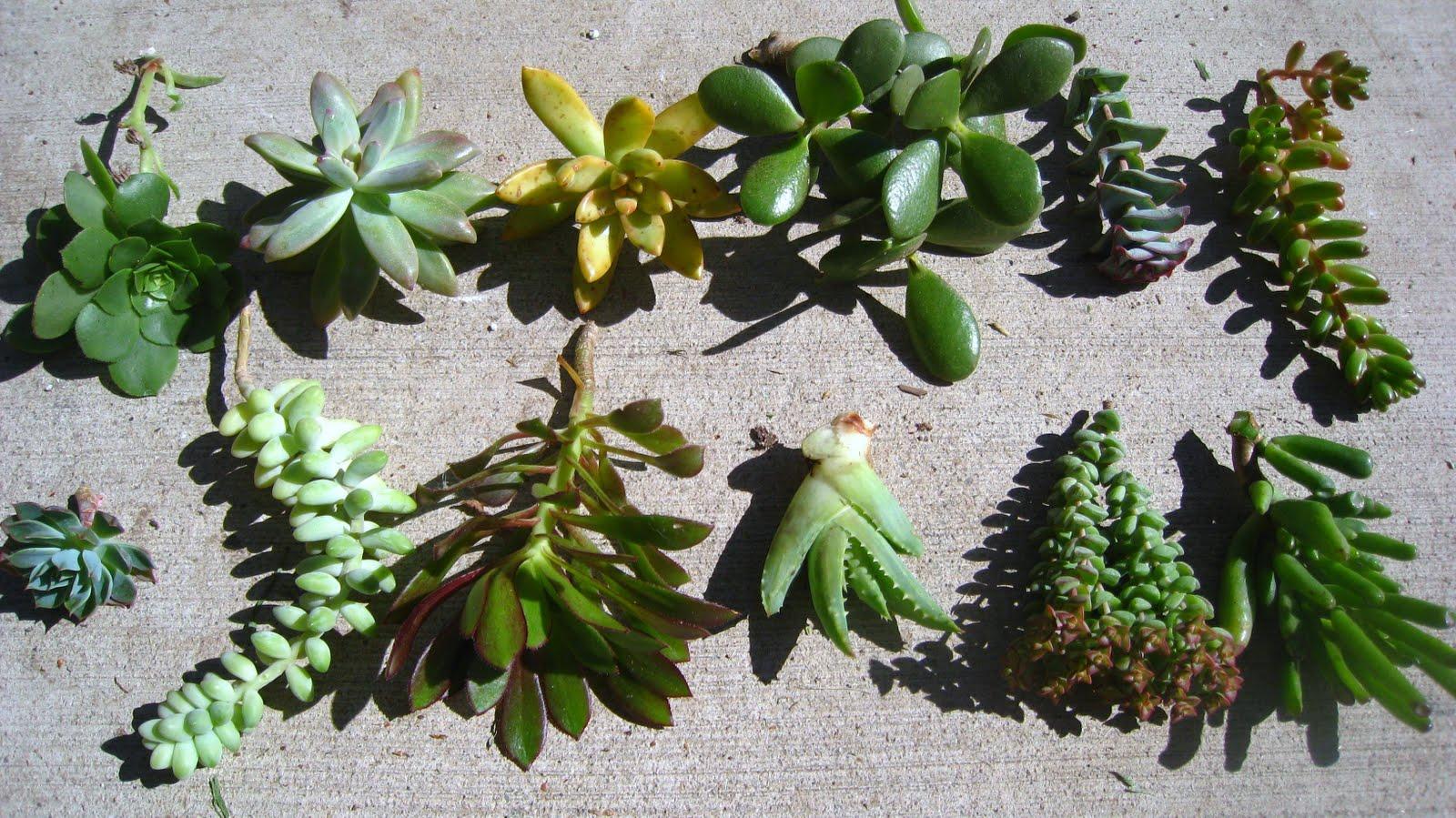 Cuadros vivos de suculentas – Ecoterrazas
