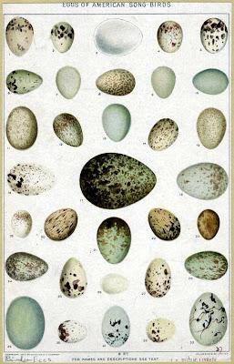 bird eggs vintage book