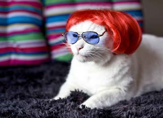 Wigs For Kitties 107