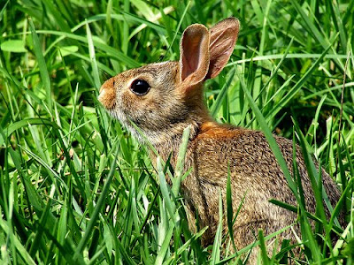 Rabbits. They are cute, they are cuddly - they make great animated