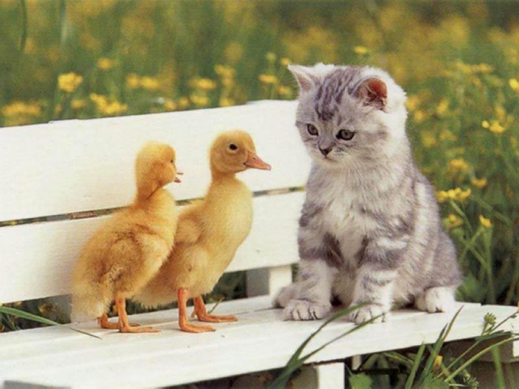 foto kucing terlucu di dunia - gambar hewan