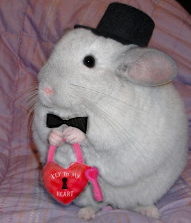 Newie the chinchilla from http://www.chinformation.com with a bow tie, hat, and a heart.