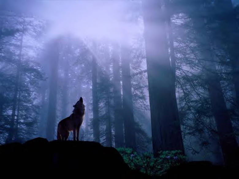 wolf (ShadowsAtNightTide.weebly.com)