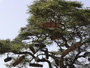 pohon lebah