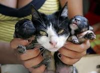 Heboh! Kucing Melahirkan Dua Ekor Anjing di Kabupaten Sidrap Sulawesi Selatan