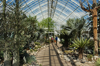 A view of the NYBG cactus house