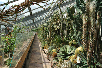 Inside the cactus and succulent house