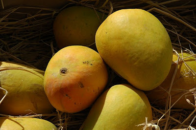 Alphonso mangoes close-up