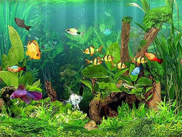 Free screensavers for pc december 2010 for Fish tank screen