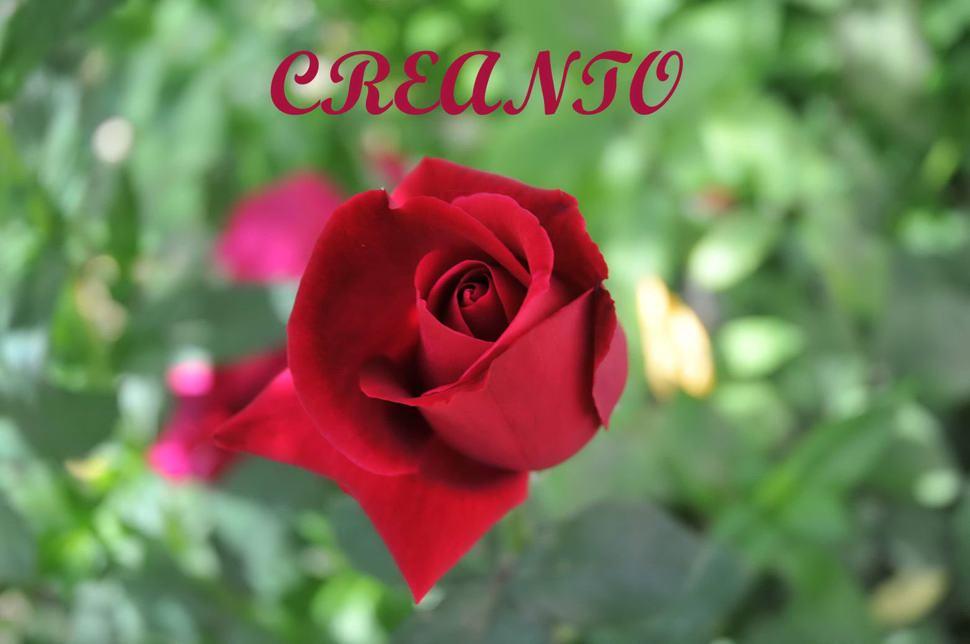 CREANTO: crea con Passione!!!