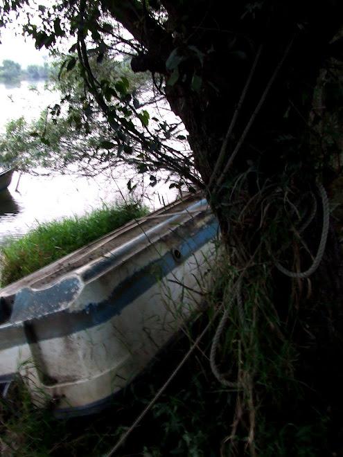 rzeka w shin-matsudo