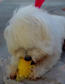 Puppy (Maltêz)