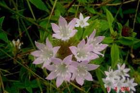 Flores Silvestres (Natal/RN)