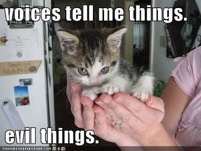 funny images of kittens. and funny cats and kittens
