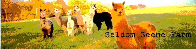 Seldom Scene Farm
