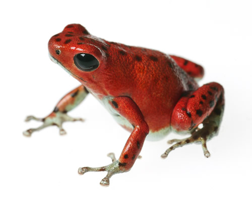 Facts About Frogs amp Toads  Live Science