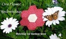 Elke woensdag een bloemetje...