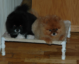 Both Jerzee & Cayenne Passed to the rainbow bridge 2011