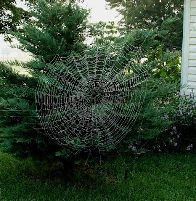 teias de aranhas incríveis fotos