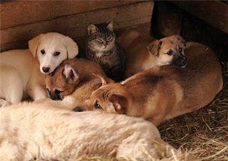 cães gatos cachorros estranho no ninho
