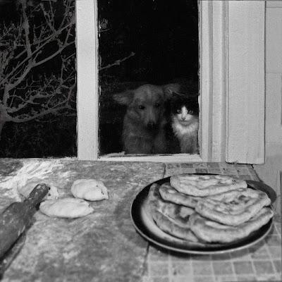cães gatos cachorros juntos para crime