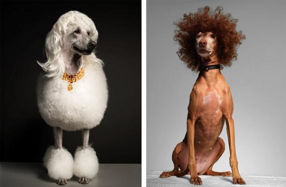 torkil gudnason cachorros penteados fashion