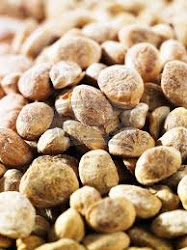 CHIRONJI NUT ( जंगल के फल SANTHALIS COLLECT)