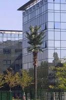 Antenas camufladas: el árbol o palmera