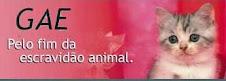 GAE - Porto Alegre
